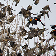 Angry Birds Eating the Garden? Absolute Bird Control(R) has the Solution to Bird Problems