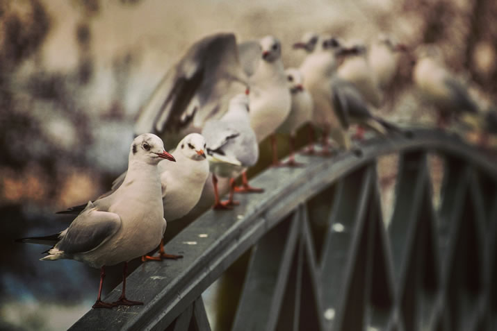 Bird deterrents: why UV light may not be the answer