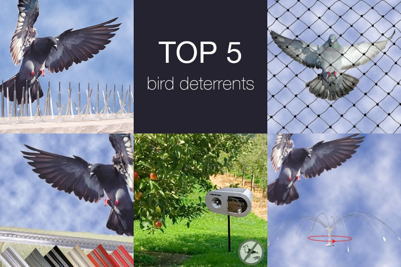 Got a Pest Bird Problem? Get These Top 5 Bird Deterrents