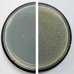 See how new antibacterial products squash superbugs