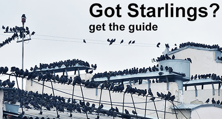 Starlings can be a Costly Nuisance, learn the facts on how to keep them away from your buildings