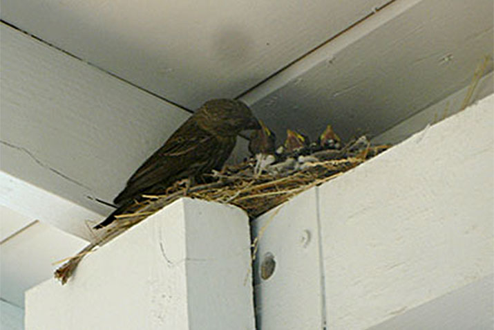 Summer Birds Nesting on Your Property?