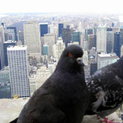 Tall Buildings need Bird Control by Bird-B-Gone, Inc.