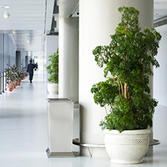 The Benefits of Plants in Your Office