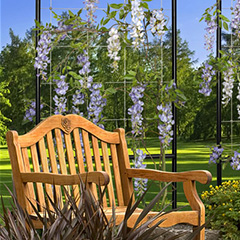 Trellises… Another way to beautify outdoor spaces with Feeney