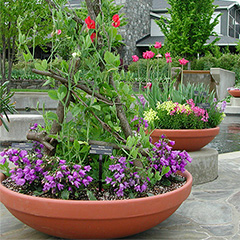What types of planters are safe to grow vegetables and fruit?